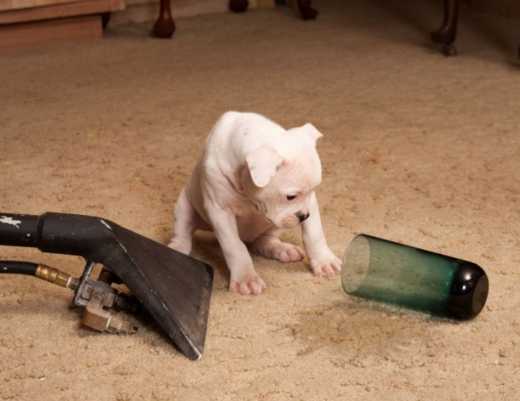 Pet stains are a common problem that can happen to any pet owner. Whether it is from your dog or cat, these unsightly stains need to be taken care of before they have time to set into the carpet and create permanent damage. Our team at Bergen County Carpet Cleaning Pros has the best products for removing tough pet stains and odors from your carpets. We specialize in odor removal so you don't have to live with them anymore!